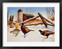 Framed Pheasants II
