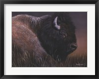 Framed American Icon- Bison