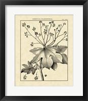 Framed Vintage Botanical Study I