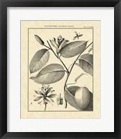 Framed Vintage Botanical Study III