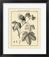 Framed Vintage Botanical Study IV