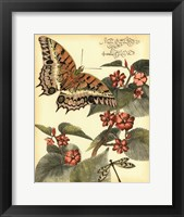 Framed Whimsical Butterflies II