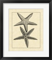 Framed Antique&Deckle Vintage Starfish I