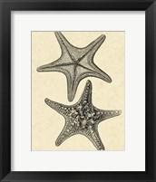 Framed Antique&Deckle Vintage Starfish II