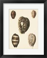 Framed Antique Diderot Shells III
