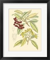 Framed Berries & Blossoms I