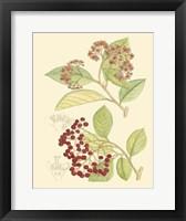 Framed Berries & Blossoms II