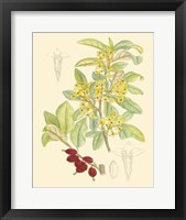 Framed Berries & Blossoms IV