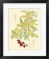 Framed Berries & Blossoms IV