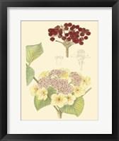 Framed Berries & Blossoms V