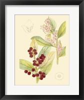 Framed Berries & Blossoms VI