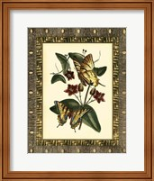Framed Leather Framed Butterflies I