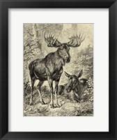 Framed Vintage Moose or Elk