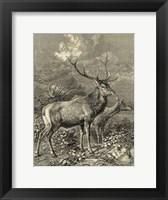 Framed Vintage Roe Deer II