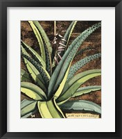 Framed Graphic Aloe III