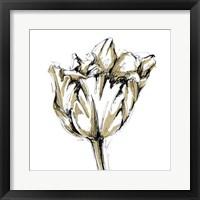 Framed Tulip Sketch I