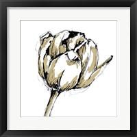 Framed Tulip Sketch II