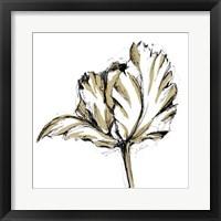 Framed Tulip Sketch III