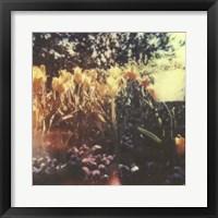 Framed Tulipa Exposta I