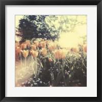 Framed Tulipa Exposta II