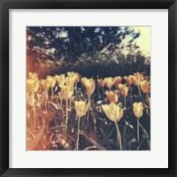 Framed Tulipa Exposta III
