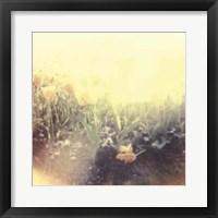 Framed Tulipa Exposta IV