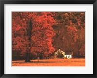 Framed Farm House on a Autumn Morn'