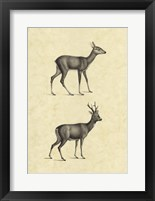Framed Vintage Deer I