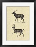 Framed Vintage Deer II