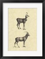 Framed Vintage Antelope
