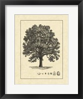 Framed Vintage Tree I