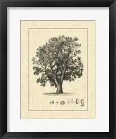 Framed Vintage Tree II