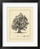Framed Vintage Tree III