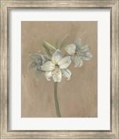 Framed Blooms & Stems IV