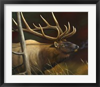 Framed Elk Portrait II