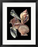 Framed Treasures of the Sea I