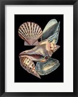Framed Treasures of the Sea II