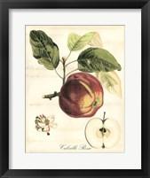 Framed Tuscan Fruits I