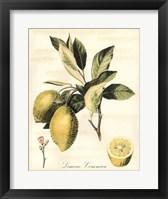 Framed Tuscan Fruits II