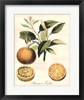 Framed Tuscan Fruits III