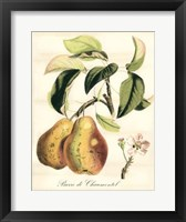 Framed Tuscan Fruits IV