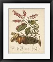 Framed Botanicals IV