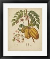 Framed Botanicals V