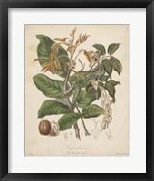 Framed Botanicals VI