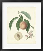 Framed Plantation Peaches I