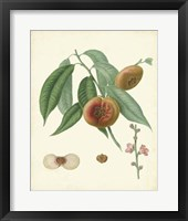 Framed Plantation Peaches II