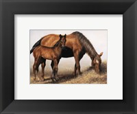 Framed Mare and Foal