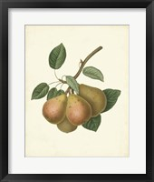 Framed Plantation Pears I