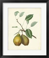 Framed Plantation Pears II