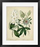 Framed Cottage Florals II